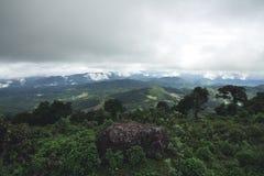 Jour pluvieux de forêt de tourisme de nature Images stock