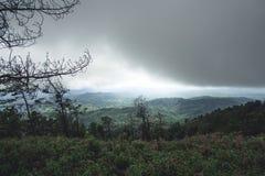 Jour pluvieux de forêt de tourisme de nature Photo stock