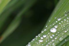 Jour pluvieux sur le jardin Image libre de droits