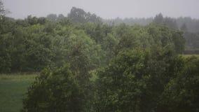 Jour pluvieux Vent violent et pluie Arbres et centrales Horizontal de nature banque de vidéos