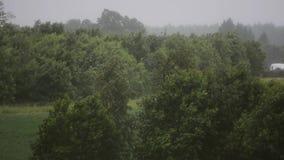 Jour pluvieux Vent violent et pluie Arbres et centrales Horizontal de nature Mouvement lent banque de vidéos