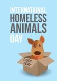 Jour sans abri international d'animaux Chien mignon dans un whith de boîte j'ai besoin de texte à la maison Choie le concept d'ad Image libre de droits
