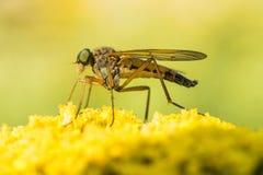 Jour spécial pour que les insectos visitent les usines Photo libre de droits