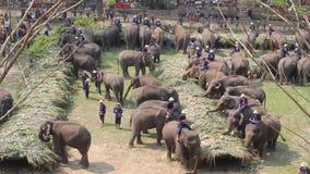 Jour thaïlandais national d'éléphant banque de vidéos