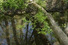 Journal över den Sarzhynka floden i Kharkiv royaltyfria foton