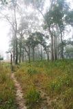 Journal brumeux de jungle Photographie stock libre de droits