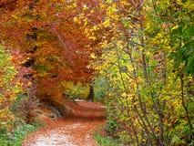 Journal d'automne scénique Photo stock