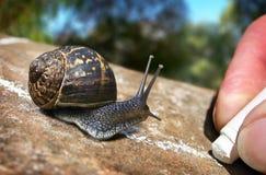Journal d'escargot de jardin Photos stock