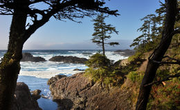 Journal d'Ucluelet, île de Vancouver Photographie stock