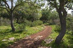 Journal dans la forêt Photos stock