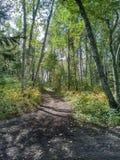 Journal dans la forêt Photographie stock libre de droits