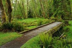 Journal dans la forêt tropicale Photographie stock libre de droits
