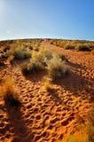 Journal dans le désert Images stock