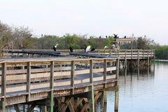 Journal dans les marais photos stock
