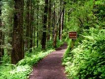 Journal de forêt Photos stock