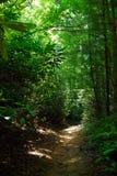 Journal de forêt Image libre de droits