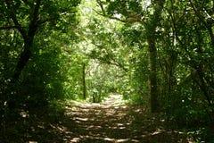 Journal de forêt Photo stock