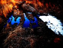 Journal de forêt Photos libres de droits