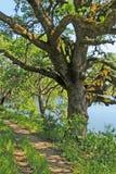 Journal de hausse de bord de lac sous l'arbre de chêne Photo libre de droits