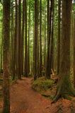 Journal de hausse de forêt image stock
