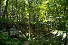 journal de hausse de forêt Photographie stock