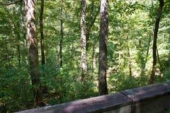 journal de hausse de forêt Images libres de droits