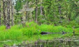 Journal de lac Elsner Photo stock