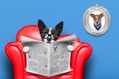 Journal de lecture de chien Photographie stock
