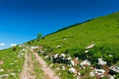 Journal de montagne sur la pente verte Photographie stock libre de droits