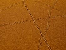 Journal de scorpion Images stock