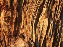 Journal för träd för bakgrundstextur gammal skogsbevuxen från en skog arkivfoton