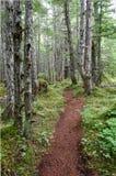 Journal par la forêt d'Alaska Image libre de droits