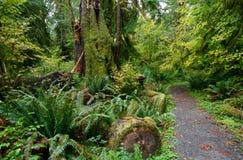 Journal par la forêt tropicale de Hoh Image libre de droits
