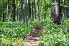 Journal par les bois. Images stock