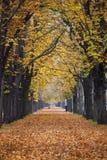 Journal/ruelle de forêt d'automne avec la taqueuse photo stock
