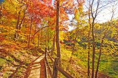 Journal tranquille par des couleurs de forêt d'automne Photo stock
