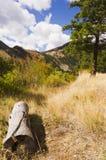 Journal vid skogslingan under molnig och blå himmel Arkivfoton