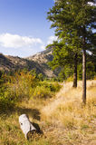 Journal vid slingan i skog Arkivfoto