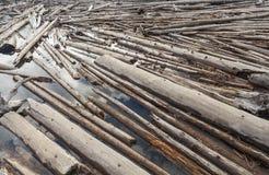 Journaldriftstopp av trädstammar Floting på en flod Arkivbild