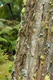 Journalen av ett gammalt träd täckte med mossa och laver på sao miguel a Arkivbilder