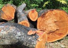 Journaler av kalhögg träd Arkivfoto