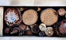 Journaler av klippt trä Arkivfoto