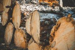 journaler av träd i skogen, når att ha avverkat Avverkade treestammar loggad Selektiv fokus på fotoet Royaltyfri Foto