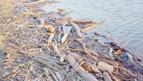 Journaler och pinnar längs flodbanken stock video