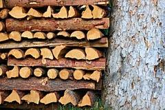 Journaler och träd Royaltyfria Foton