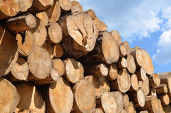 journaler pile trä Fotografering för Bildbyråer