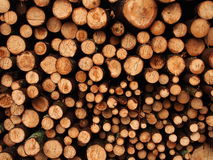 Journalhög från skogsavverkning Royaltyfria Bilder