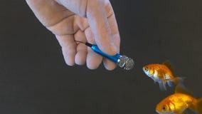 Journalista com os peixes das entrevistas do microfone