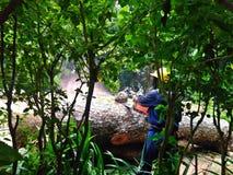 Journalklipp - skogsavverkning arkivbild