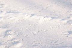 Journaux de canard dans la neige Photographie stock